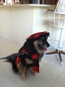 Jabba-bear in costume as a Scotsman (Christmas 2012, Punta Gorda Florida).