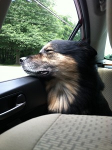 On the way home from the vet