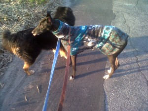 First walk together