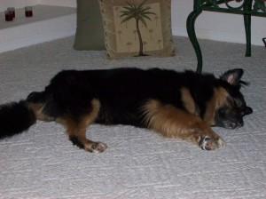 Jabba-bear asleep on the floor at his maternal grandpawrents' house in Florida. He developed temporary vitiligo as a side-effect of the chemotherapy (notice his pink lips and  nose).