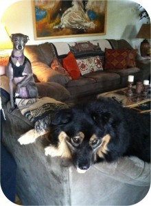 """Jabba-bear and his """"big"""" sister, Xena, looking out the window"""
