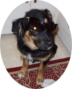 Jabba-bear rocking sunglasses. What a cool dog! This photo was taken during his rebellious phase.